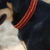 Стильный ошейник для собаки из паракорда